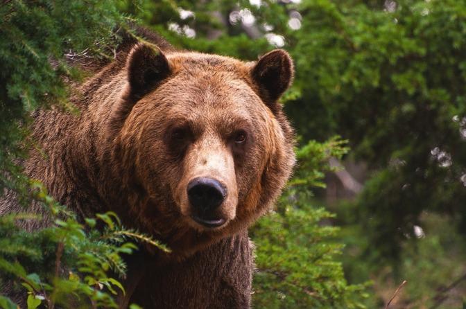 The Momma Bear Protocol
